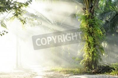 Fototapeta Palm hmla světla farmy den venku