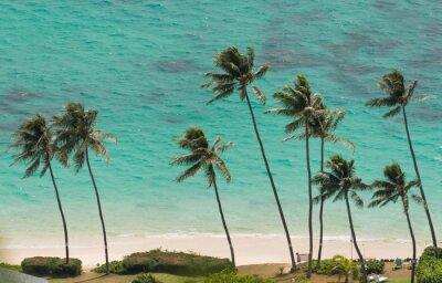 Fototapeta Palm stromy na pláži Waimanalo, Havaj
