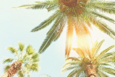Fototapeta palma a slunce