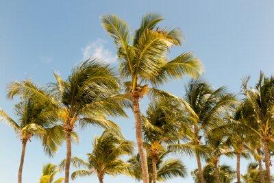Fototapeta Palmy na pozadí krásného slunečního světla