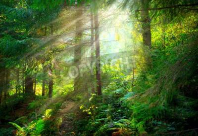 Fototapeta Park. Krásná misty starý les