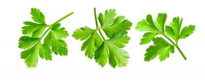 Fototapeta Parsley herb isolated on white background