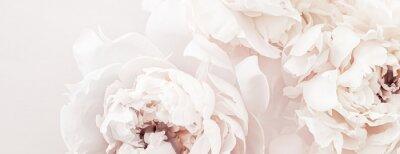 Fototapeta Pastel peony flowers in bloom as floral art background, wedding decor and luxury branding design