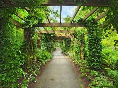 Fototapeta Pergola průchod v zahradě, obklopen vistárie a popínavé rostliny