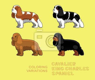 52f19ed4ed8 Fototapeta Pes Kavalír King Charles španěl zbarvení Variace vektorové  ilustrace