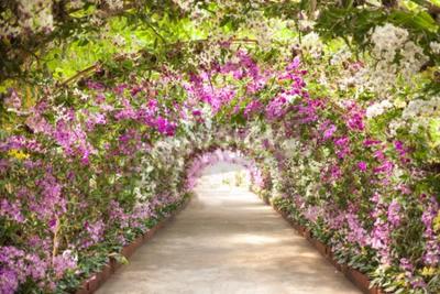 Fototapeta pěšina v botanické zahradě s orchidejemi, které lemovaly cestu.