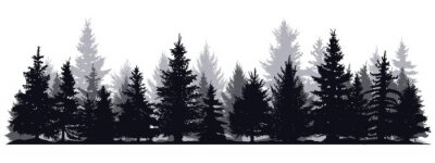 Fototapeta Pine trees silhouettes. Evergreen coniferous forest silhouette, nature spruce tree park view vector illustration. Coniferous woods silhouette