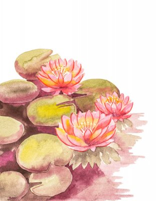 Fototapeta Pink lotuses with brown-green leaves, top right blank background for an inscription, watercolor handwork.