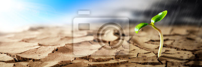 Fototapeta Plant Growing In Hot Dry Desert With Sunshine And Rain Storm Coming On The Horizon - New Life / Hope Concept