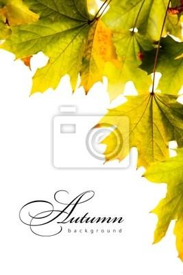podzim backgroundl javorové listy