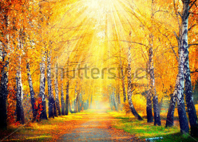 Fototapeta Podzim. Podzim. Podzimní park. Podzimní stromy a listy v slunečních paprscích. Krásná podzimní scéna