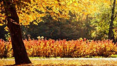 Fototapeta podzimní scenérie v parku