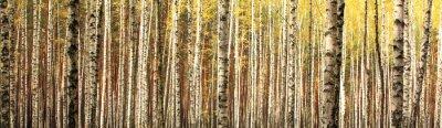 Fototapeta podzimu bříza prales terén panoramatická