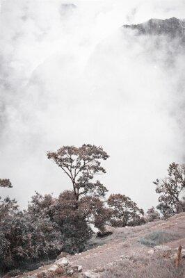 Fototapeta Pohled z Machu Picchu