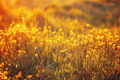 Fototapeta pole jarních květin