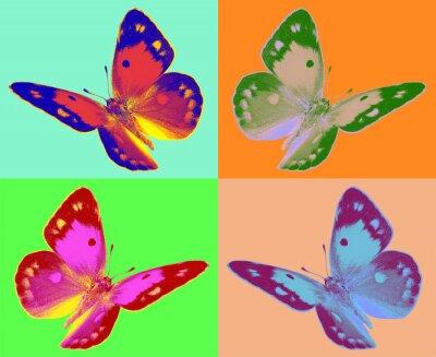 Fototapeta pop Colias butterfly