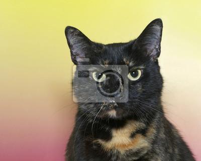 černé ženy růžová kočička