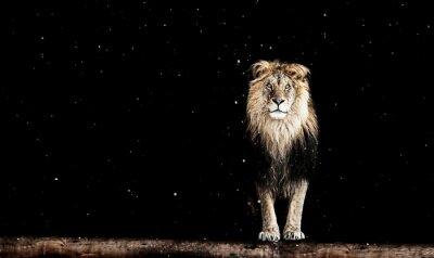 Fototapeta Portrét krásné lva, geometrický vzor