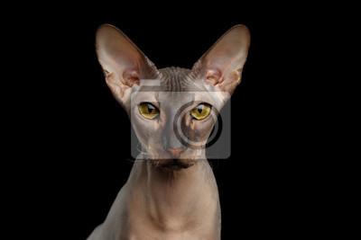 nahé kočička vybírá