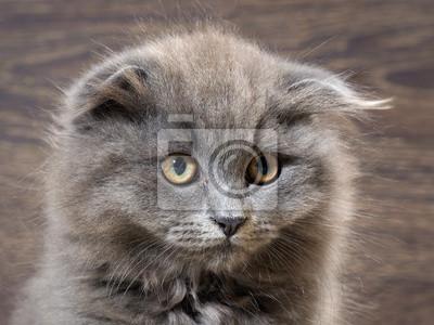 velká vlasy kočička černá striptérka sex tape