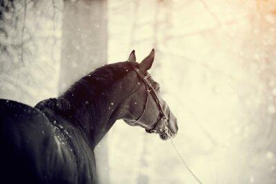 Fototapeta Portrét sportovní koně