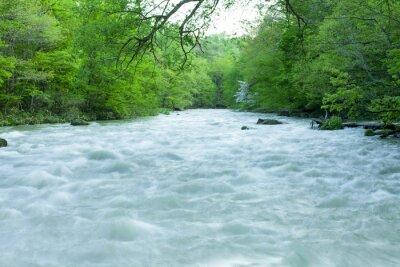 Fototapeta Potok v zeleném lese