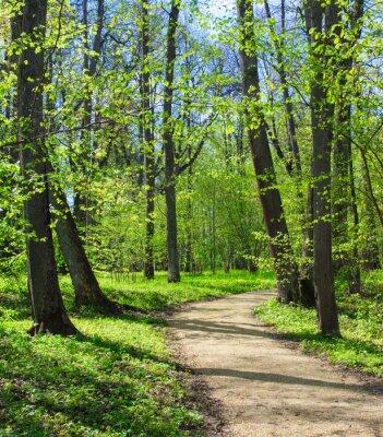 Fototapeta Prázdná cesta v jarním parku