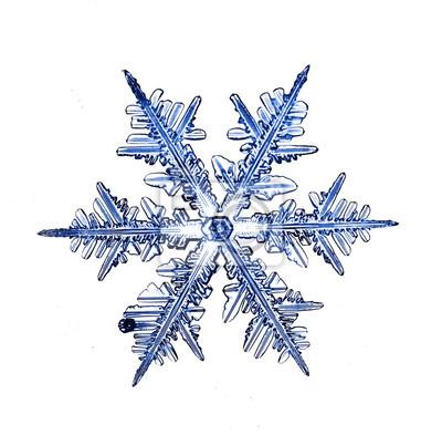 Výsledek obrázku pro sněhová vločka