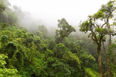Fototapeta Přírodní les v Magoebaskloof