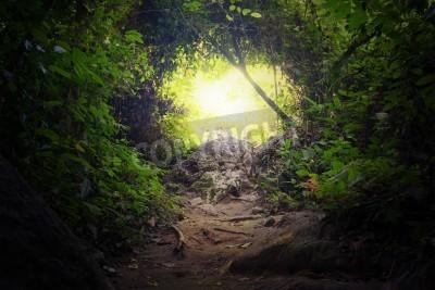 Fototapeta Přírodní tunel v tropické džungli lesní cesta způsobem cesty přes svěží zeleň a stromy evergreen hustý déšť lesní Tajemné kouzlo pozadí