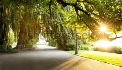 Fototapeta Promenáda v krásném městském parku