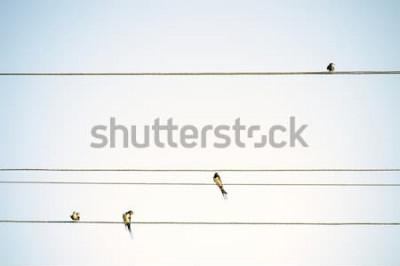 Fototapeta Ptáci prsa sedí na drátech minimalistický jarní pozadí