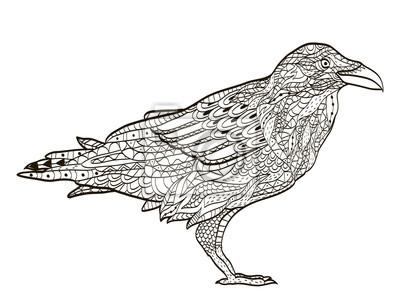 Ptak Havran Omalovanky Pro Dospele Vektoru Fototapeta Fototapety