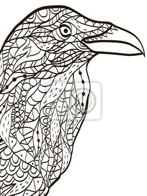 Ptak Hlava Havran Omalovanky Pro Dospele Vektoru Fototapeta