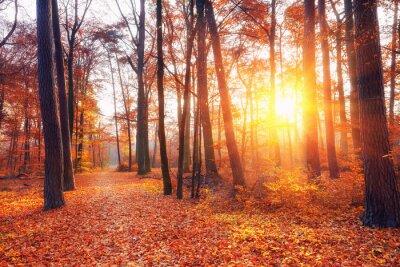 Fototapeta Pulzující západ slunce v podzimním lese