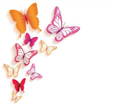 Fototapeta Realistické barevné motýli Izolované na jaro