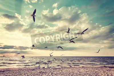 Fototapeta Retro stylizovaná pláž s létajícími ptáky při západu slunce.