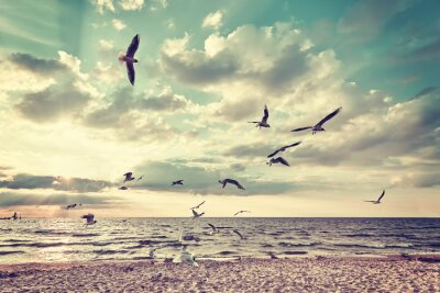 Fototapeta Retro stylizovaný pláž s létajícími ptáky při západu slunce