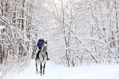 Fototapeta Rider na koni na okraji zasněžené lesy v zimě