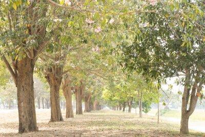 Fototapeta road in garden