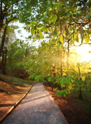 Fototapeta Road v zeleném městském parku, osvětlená paprsky slunce