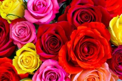 Fototapeta Roses pozadí