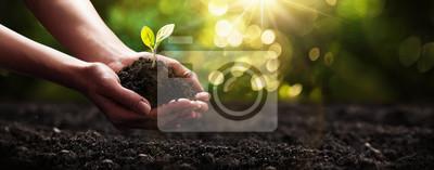 Fototapeta Rostlina v ruce. Koncepce ekologie. Přírodní pozadí