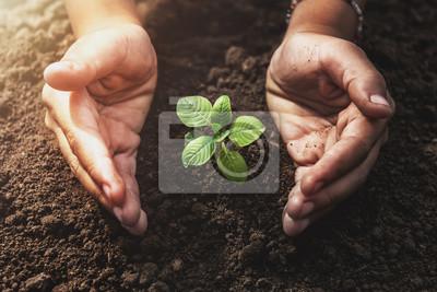 Fototapeta rostoucí rostlina s ochranou rukou a slunečním zářením v zahradě. koncept eco