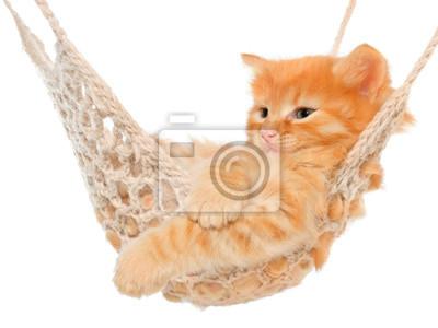 Zrzavá kočička