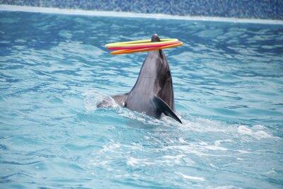 Fototapeta roztomilé delfíny během projevu v delfináriu