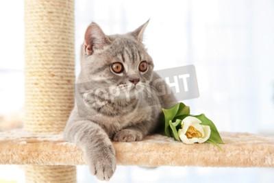Fototapeta Roztomilý kočka ležící na ořezávátko s tulipánem ve světlé místnosti