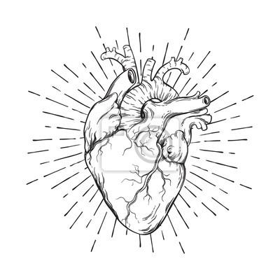 Rucne Kreslene Lidske Srdce Se Sluncem Anatomicky Spravnym Umenim