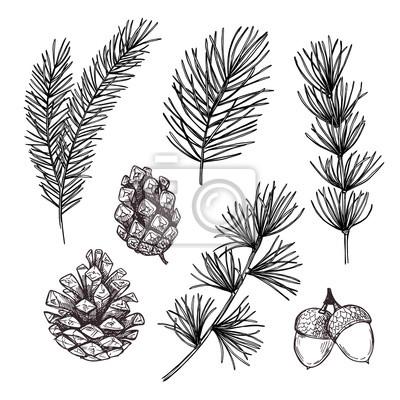Rucne Kreslene Vektorove Ilustrace Kolekce Forest Autumn Smrkove