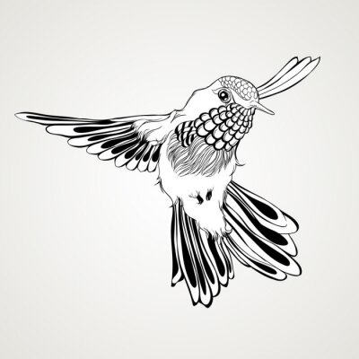 Fototapeta Ručně malovaná létání kolibříka historické styl.
